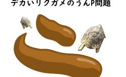 リクガメの糞が臭すぎる問題