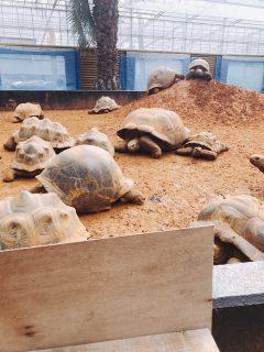 【観光】爬虫類オンリー!体感型動物園iZoo(イズー)が楽しすぎる。